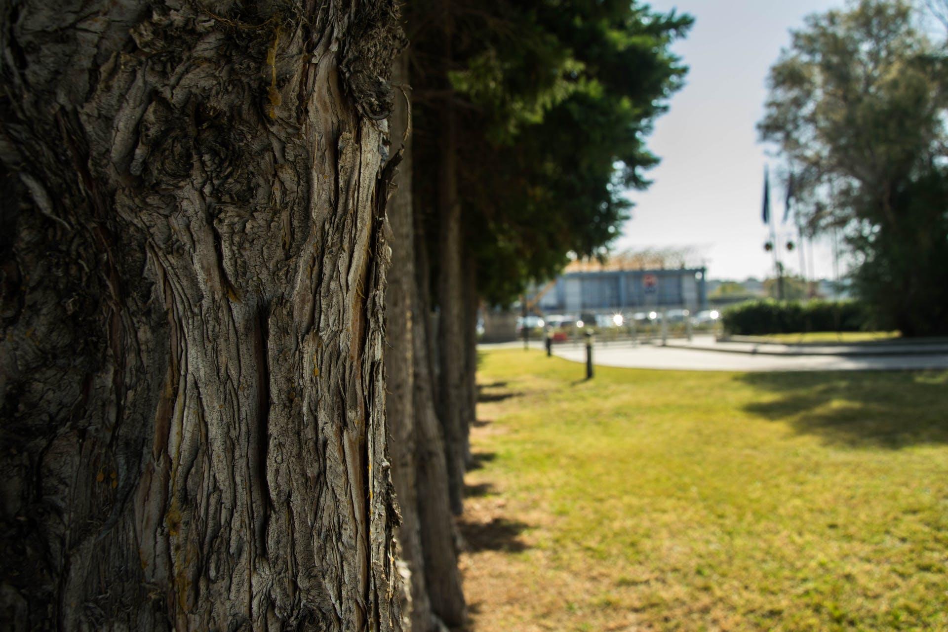 Grass Trees Sunny Day - WallDevil