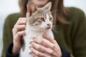 adorable close-up cat looking hands portrait pet sit whiskers fur
