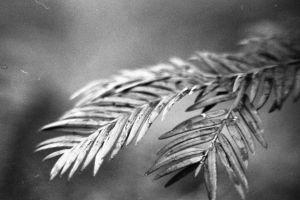 analog tree macro photography black and white macro photo analogue nature macro