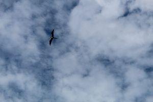 animal sky animals clouds bird flying eagle
