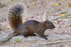 animal squirrel cute wildlife tail close-up rodent wild daylight nature