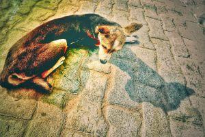 animal street dog dog