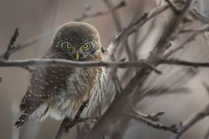 animal wildlife photography perched eyes blur aviary close-up looking wildlife tree branch