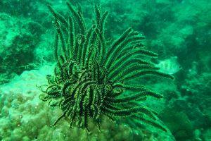 aquatic marine nature submarine saltwater underwater invertebrate coral ocean wildlife