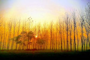 background image early morning morning sun forest sunrise