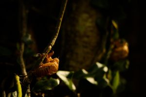background nature background green cicada