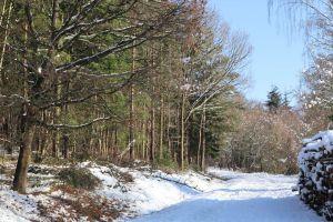 basing wood snow snow on tree tree