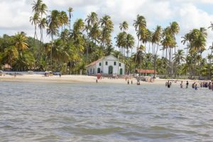 beach basilica coconut tree