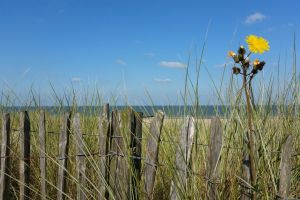 beach dunes sea