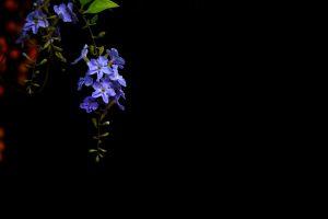beautiful flower blue flower flower
