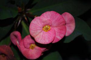 beautiful flower little beautiful flower