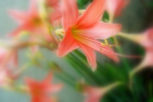 beautiful flowers pink flowers flower focused green early morning nature