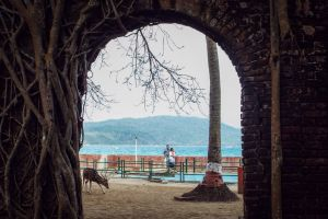 behind the scene couple travel photoframe blue sea abstract photo tree deer frame sea real deer