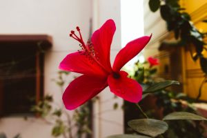 bell flower flower garden garden garden flower flowering plant beautiful flower beauty in nature flower wallpaper flower spring flower