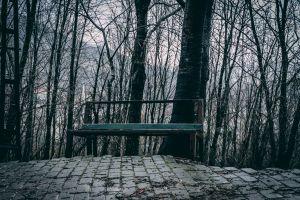 bench roadside dark forest