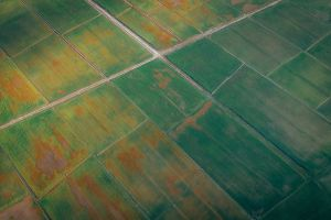 bird's eye view cropland drone photography aerial photography pattern aerial plantation greenery farmland aerial shot