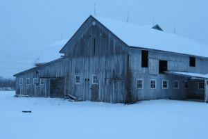 blue background winter barn