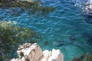 blue water pine tree sea rock south france mediterranean sea