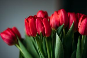 bouquet flowers colors blooming beautiful petals bloom tulips flora close-up