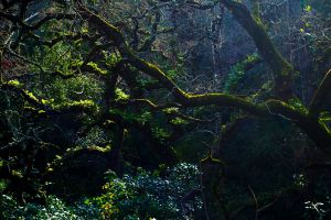 branches aforestation forest light