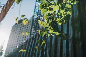 bright hd wallpaper 4k wallpaper depth of field growth focus foliage sunlight close-up blur
