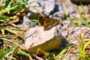 butterfly animals insect perched plants stone ground nature
