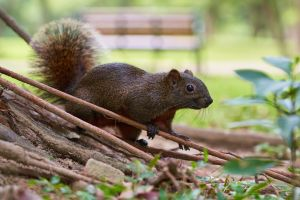 close-up rodent animal adorable wild cute tail daylight wildlife squirrel