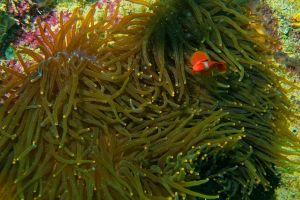 color echinoderm indonesia submarine ocean aquatic sea tropical coral scuba