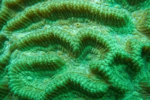 color underwater sponge saltwater coral turquoise reef ocean sea texture