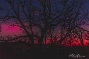 colorful sunrise dark sunset tree nature red purple black moon