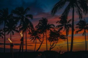 colorful sunset sunset vacation beach palm trees paradise hawaii maui