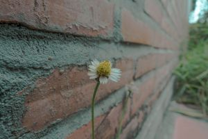 cool wallpaper flower lonely brick wall
