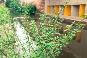 cool wallpaper greenery stream desktop wallpaper computer wallpaper shrubs bunch of flowers colorful wallpaper nature bush
