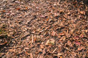cover beautiful park pattern season texture orange heap floor tree