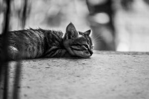 cute blurry background kitty cat cute animals black and white