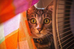 cute eyes green cat orange pet portrait daylight animal portrait animal photography portriat