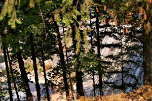 dams trees landscapes
