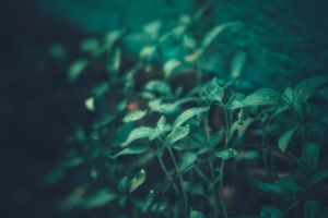 dark green macro photo dark green plants green blurred background green plants dark background macro hd wallpaper macro photography