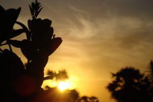 dark sun early morning sunrise