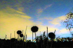 dawn nature night horizon sunset