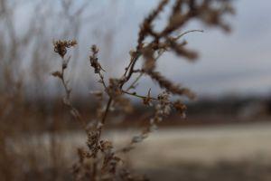 depth of field plants texture wilderness seeds grass