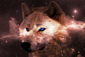 desktop background animal cute animals desktop wallpaper galaxy wallpaper background wolf hd wallpapers night sky desktop backgrounds