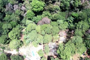 drone forest green woods nature bosque trees