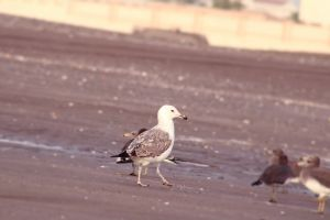 eating out white bird ocean blacksea wildlife photography bird photography