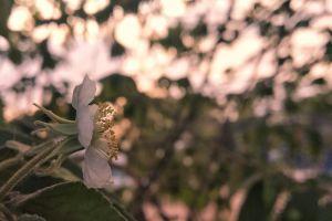 evening flower beautiful flower nature sunset