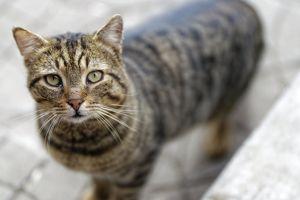 eyes looking feline animal mammal grey cat selective focus cute cat street photography
