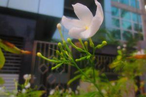 flower adorable white bloom