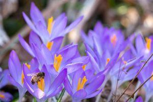 flower bee macro