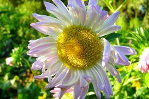 flower green closeup violet yellow white bloom summer