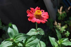 flower red flower plant